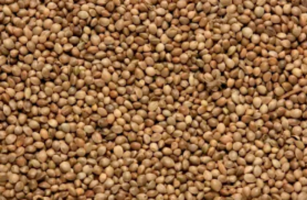 Picture of Copdock Mill Hemp Seed 15kg