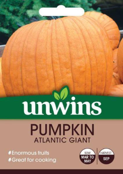 Picture of Unwins Pumpkin Atlantic Giant Seeds