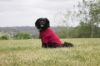 Picture of Weatherbeeta Comfitec Fleece Dog Jumper