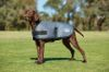 Picture of Weatherbeeta Comfitec Classic Dog Coat Dark Grey